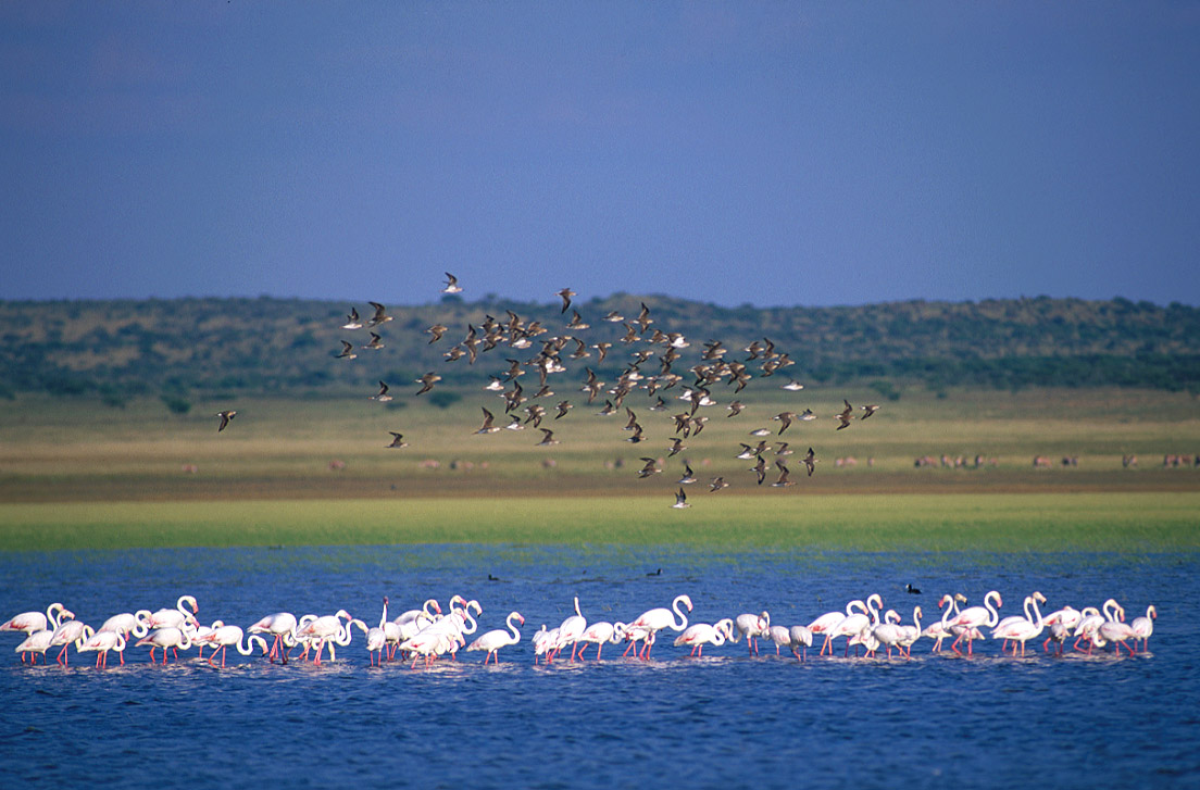 flamingoes-on-marrick
